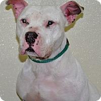 Adopt A Pet :: Nickel - Port Washington, NY