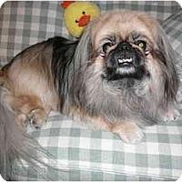 Adopt A Pet :: Peek-A-Boo - Mesa, AZ