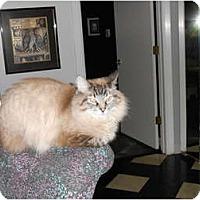 Adopt A Pet :: King Louie - Jeffersonville, IN