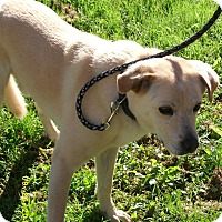 Adopt A Pet :: Max-Prison Obedience Trained - Hazard, KY