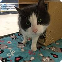 Adopt A Pet :: Gordon - Byron Center, MI