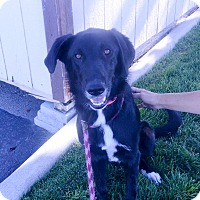 Adopt A Pet :: Lady - Meridian, ID