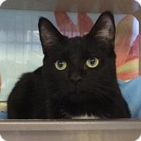 Adopt A Pet :: Nicholas - New York, NY