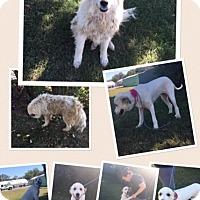 Adopt A Pet :: Annie - Russellville, KY