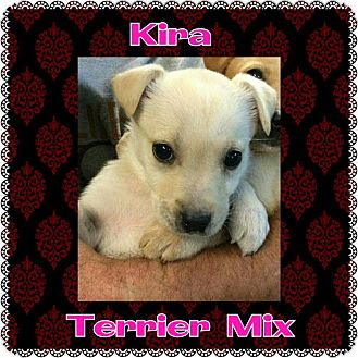 Terrier (Unknown Type, Medium) Mix Puppy for adoption in Harrisburg, North Carolina - Kira