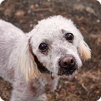 Adopt A Pet :: Murray - La Verne, CA