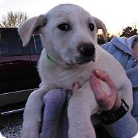 Adopt A Pet :: Hatch - Aurora, CO