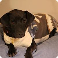 Adopt A Pet :: Merry - St. Bonifacius, MN