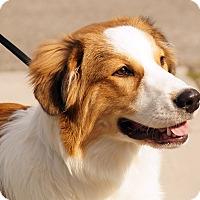 Adopt A Pet :: Banjo - Maynardville, TN