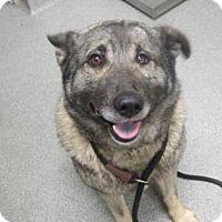 Adopt A Pet :: Mino - Lincolnton, NC