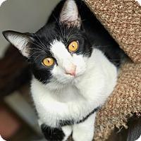Adopt A Pet :: Comet - Hanna City, IL