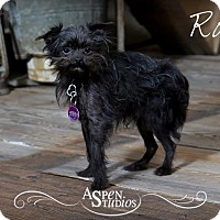 Adopt A Pet :: Ross - Valparaiso, IN