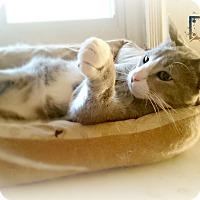 Adopt A Pet :: Bolt - Nottingham, MD