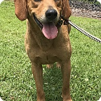 Adopt A Pet :: Dixie - Newport, NC