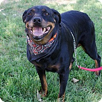 Adopt A Pet :: ANYA - Poteau, OK