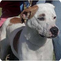 Adopt A Pet :: Sammie - Staley, NC