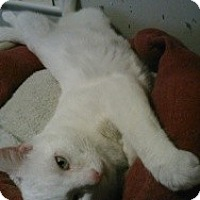 Adopt A Pet :: Diego- Luna - bloomfield, NJ