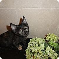 Adopt A Pet :: Cady - Phoenix, AZ