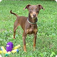 Adopt A Pet :: Jack - Mocksville, NC