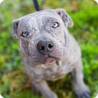 Adopt A Pet :: Jimi - East Rockaway, NY