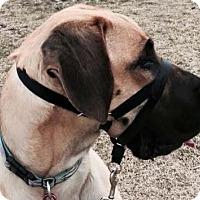 Adopt A Pet :: Emmelee - Albuquerque, NM