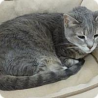 Adopt A Pet :: magnum - Youngtown, AZ