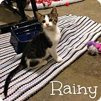 Adopt A Pet :: Rainy - Bentonville, AR