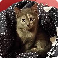 Adopt A Pet :: MERIDA - Madison, AL
