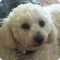 Adopt A Pet :: Franky - La Costa, CA