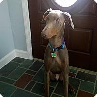 Adopt A Pet :: Hercules - Bath, PA