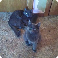 Adopt A Pet :: The Blues Brothers - Montgomery, IL