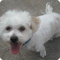 Adopt A Pet :: Ruffy - Auburn, CA