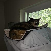 Adopt A Pet :: Muffy - El Dorado Hills, CA
