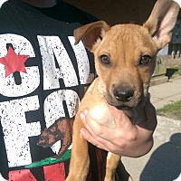 Adopt A Pet :: Shelton - Ogden, UT
