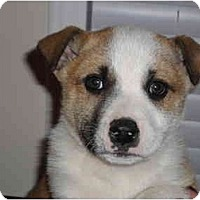 Adopt A Pet :: Carson - Washington, NC