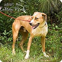 Adopt A Pet :: Leroy - Fort Valley, GA
