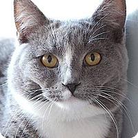 Adopt A Pet :: Tom - Irvine, CA