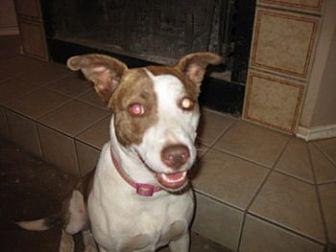 Hound (Unknown Type) Mix Dog for adoption in San Antonio, Texas - Angel