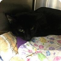 Adopt A Pet :: Spooky - Lunenburg, MA
