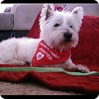 Adopt A Pet :: Gage - Albemarle, NC