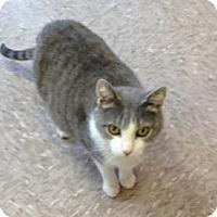 Adopt A Pet :: Lana - Byron Center, MI
