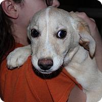 Adopt A Pet :: Lauren - Harmony, Glocester, RI