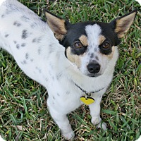 Adopt A Pet :: Bentley - I'm an easy dog! - Los Angeles, CA