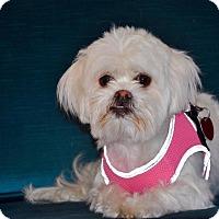 Adopt A Pet :: Princess - Manassas, VA