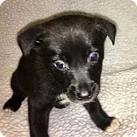 Adopt A Pet :: Doc - Sparta, NJ