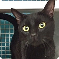 Adopt A Pet :: Cyda - LaJolla, CA