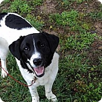 Adopt A Pet :: BOUNCY - Parsons, TN