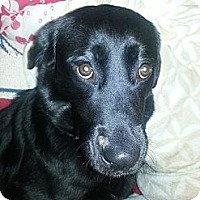 Adopt A Pet :: Beulah - Painesville, OH