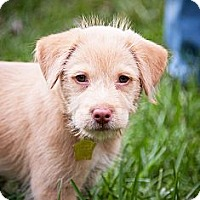 Adopt A Pet :: Aine - Kingwood, TX