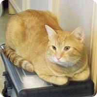 Adopt A Pet :: Bo - Catasauqua, PA